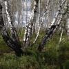 В Омской области грибники нашли останки пропавшего в мае односельчанина