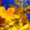 Тёплая осень аукнется будущей весной