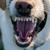 В Омской области обнаружили бешеную собаку
