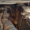 Омич нашел трех котят под капотом автомобиля