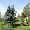 Омский дендропарк назовут в честь автора голубых елей
