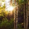 В Омской области пока не обнаружены кабаны, зараженные африканской чумой