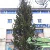 В Омске установили первую новогоднюю елку