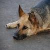 Омичи могут помочь кормом для бездомных собак