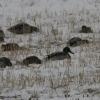 В омском парке «Птичья гавань» птиц подкармливают зернами