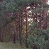 Начальник Тарского лесничества получил условный срок за сокрытие незаконной вырубки