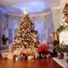 Советы по организации новогодней поездки в Подмосковье
