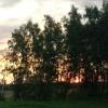 Омичи высадили почти 9 тысяч саженцев в рамках акции «Живи лес!»