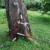 Охотничьи луки: виды и особенности
