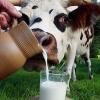 Было изъято и уничтожено более 42 кг молочных продуктов