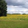 Данные сельхозпереписи позволят более полно использовать потенциал АПК Омской области