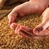 В Омской области завершается ремонт Кормиловского комбината хлебопродуктов