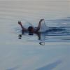 В реке Уй Тарского района утонул 17-летний парень