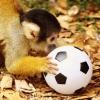 Большереченский зоопарк собирает игрушки для своих питомцев