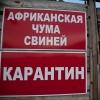 Очаг чумы свиней в Шербакульском районе ликвидирован
