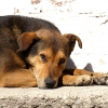 Бродячим собакам дали срок отлова