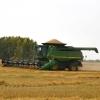 Омская область вошла в число лидеров СФО по выращиванию овощей и картофеля