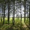 У Омска появится «зеленый щит»