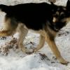 Омское «Спецавтохозяйство» не прививает собак и не проводит дезинфекцию помещений