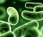 Сначала бактерии, потом мамонты?