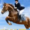Что нужно для езды на лошади?