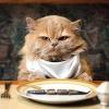 Преимущества кормов-холистиков для кошек