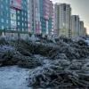 Омичи обсуждают в соцсетях брошенные на улицах елки