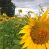 В первую неделю августа в Омске будет меньше дождей и больше солнца