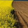 Минимущества Омской области изменит порядок изъятия сельхоз земли при ненадлежащем ее использовании