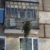 Омичи подвесили елку на бельевых веревках на балконе