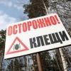 В Омском регионе с начала сезона от клещей пострадало 1205 человек
