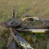 В Чкаловском поселке Омска водитель иномарки сбил 12-летнего велосипедиста