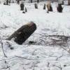 В Омске создание аллеи героев-спасателей променяли на автостоянку
