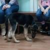 Юных омичей научат работать с собаками