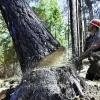 Омичи опасаются вырубки леса у Аграрного университета