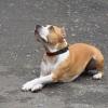 В Омске юных собаководов приглашают в первый «Аф» класс