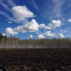Весна зашла в Омскую область с севера