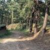 Рослесхоз проверит леса Омской области