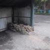 Омич-чемпион выбросил новогоднее дерево в сентябре