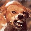 В Омской области нашли зараженных бешенством животных