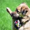 Воспитание послушания у детей и собак