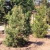 В Омской области лесопосадки продолжатся до середины июня