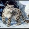 В Татарстане начнут разводить снежных барсов
