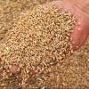 Рекордный урожай 2017 года стал для омских фермеров проблемой