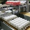 В 2017 году на омской птицефабрике произведут 1,5 миллиона штук яиц индейки для племенной репродукци