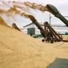 Омская область вышла в лидеры по уборке зерновых в СФО