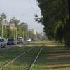 Омская мэрия пообещала вырубать только больные деревья