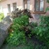 В Омске половина жителей поселка  Телевизионный остались без света из-за дерева