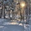 За лесами Омской области будет следить специальный совет
