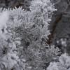 В Омской области в новогоднюю ночь ударит 30-градусный мороз